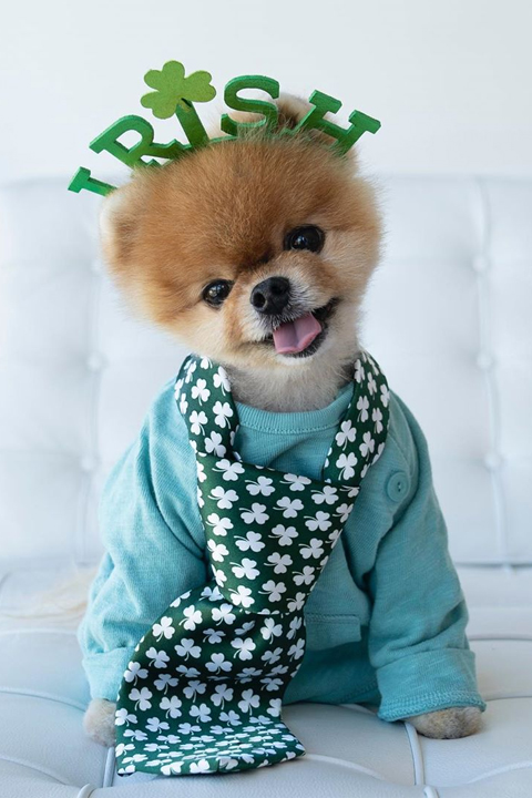 JiffPom wearing Irish head band and tie and is stealing our heart