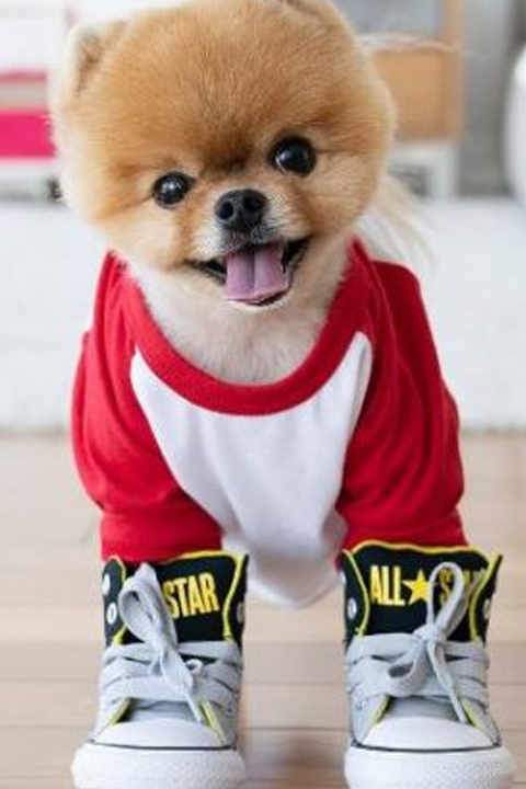 jiffpom wearing red tshirt and sneakers